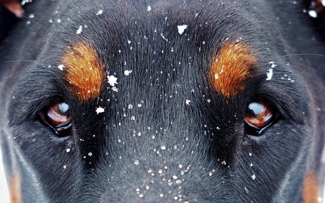 Hány szemhéja van a kutyáknak?